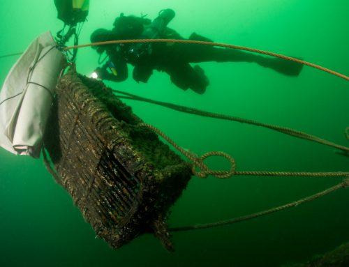 Duikers bergen 750 kilo visnet en leggen meer dan 150 verschillende soorten vast tijdens 12e editie 'Expeditie Noordzee'