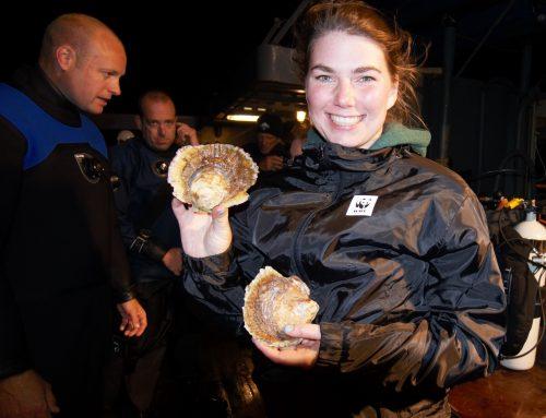 Het cirkeltje is rond: het oesterrif is gezond!